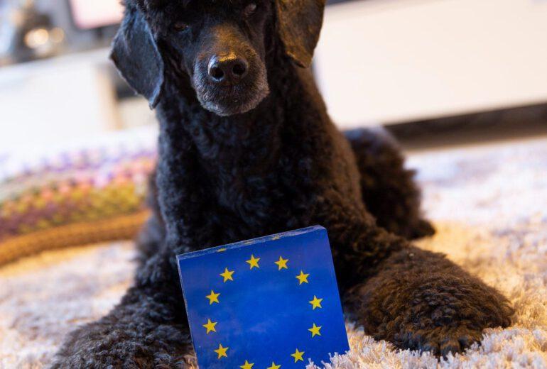 Nero koira ja EU:n lippu